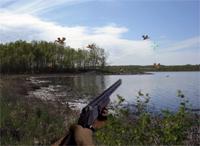 Бесплатная флеш игра-онлайн, охота на уток